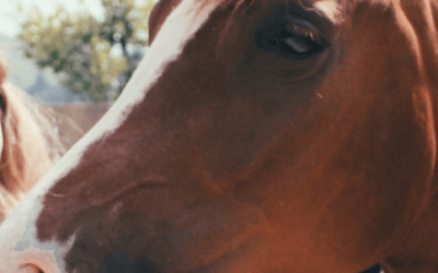 Mindset, Connection & Horse Welfare with Equine Connection