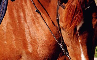 Keeping it Simple! The #horsetimechallenge