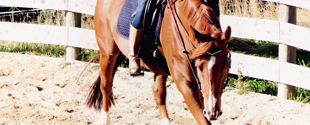 From the subtle to the physical: The Intentional Riding Project